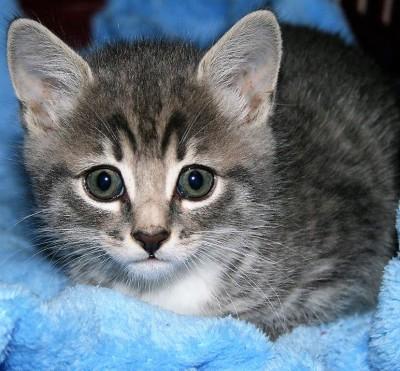 cute fifi